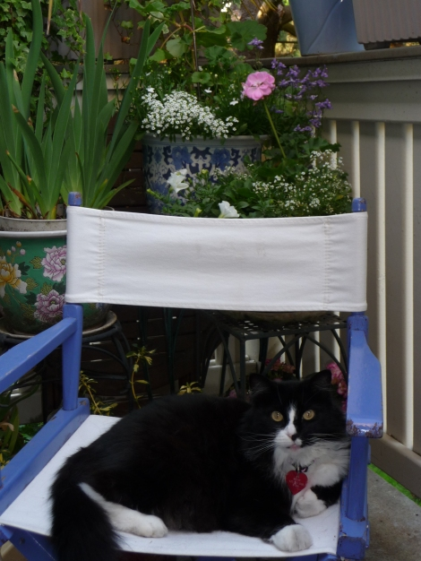 Bitzie's Secret Garden