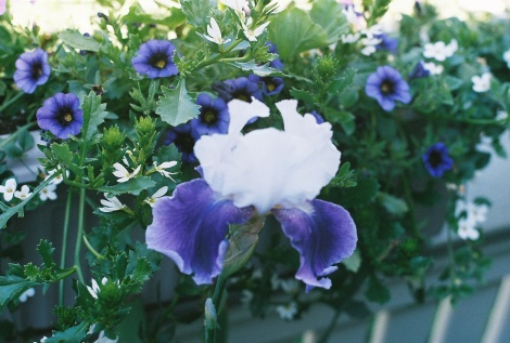 2008flowers2