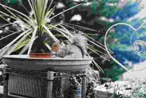 Squirrel2008a