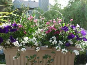 2009 June Flower Box