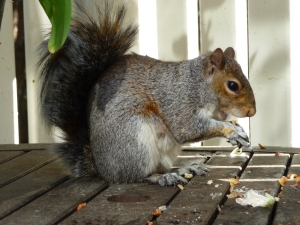 Squirrel 2009 C