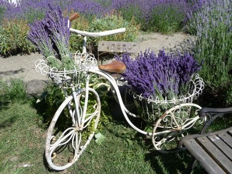 Cedarbrook's Bike