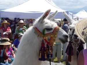 Lavender Festival 2009 Olympic Llama