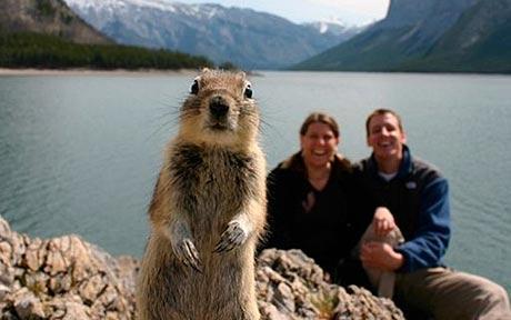 BanffSquirrel