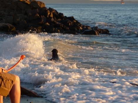 Edmonds, WA dog beach