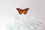 ButterflyRising
