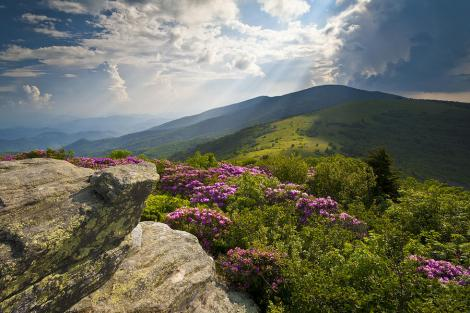 Roan Mountain on the Appalachian Trail
