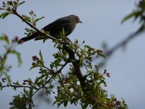 BirdGuard